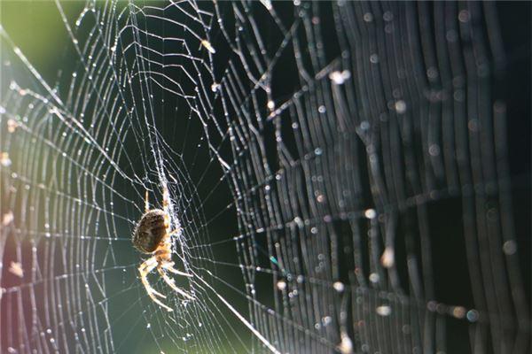 梦见打扫蜘蛛网