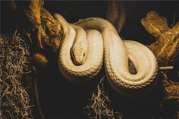 孕妇梦见白蟒蛇