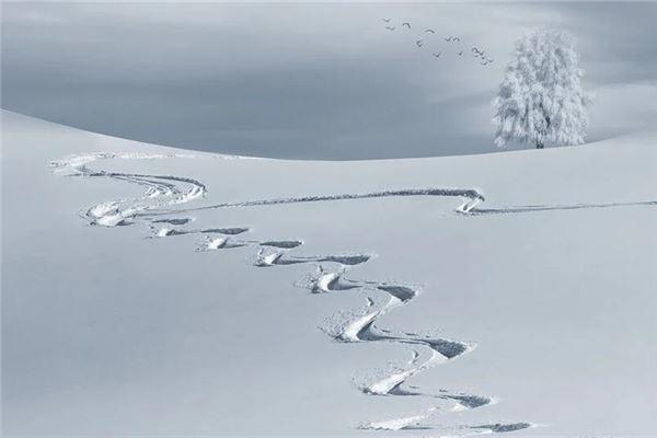 梦见白茫茫的雪