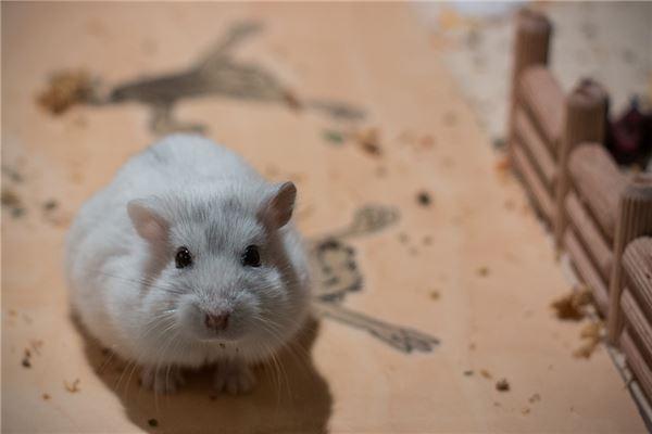 梦见踩死一只老鼠