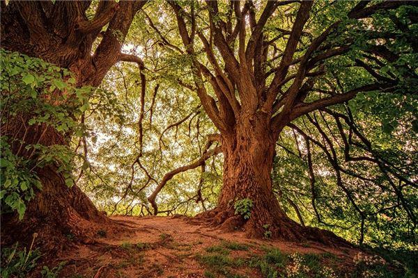 梦见大树被风吹倒