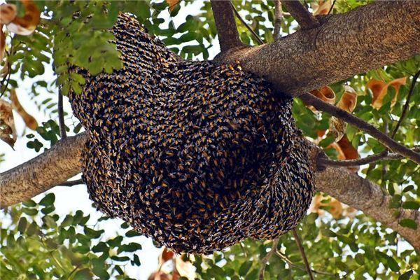 梦见蜂窝 蜂巢