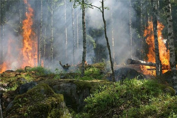 梦见山林起火 山中起火