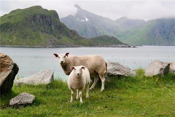 梦见与牲畜对话