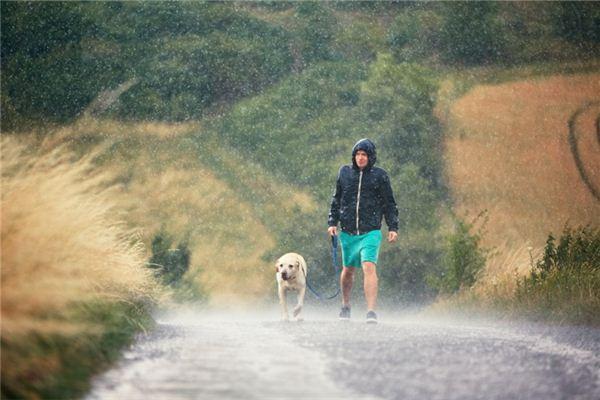 梦见在雨中奔跑
