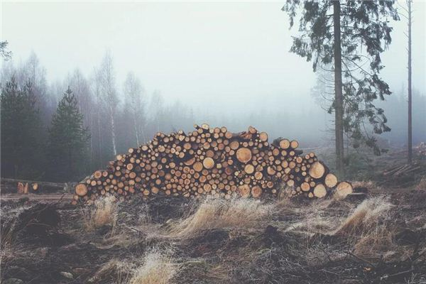 梦见木头 木材
