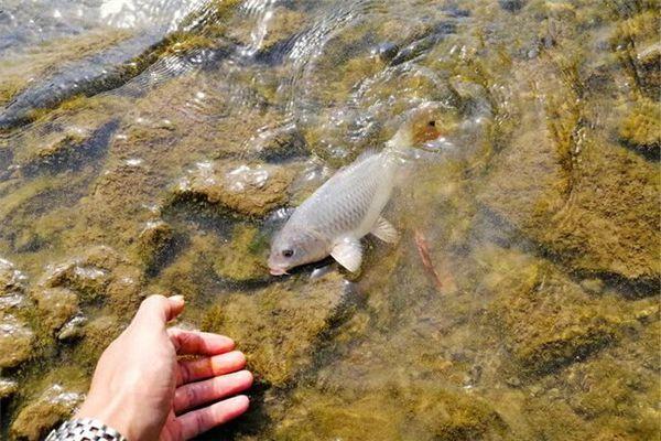 梦见海边抓鱼