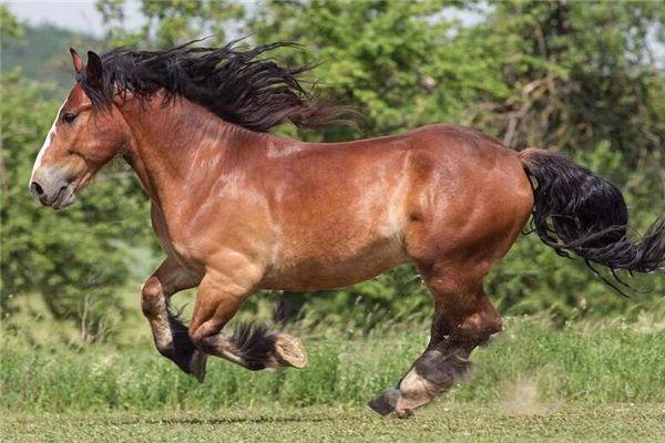 梦见骑枣红马