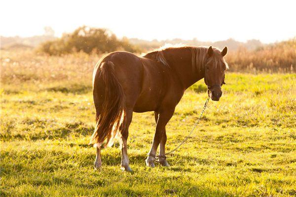梦见给马喂食