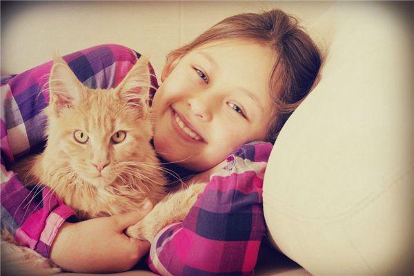 梦见抱着猫