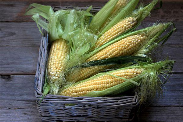 梦见收获玉米