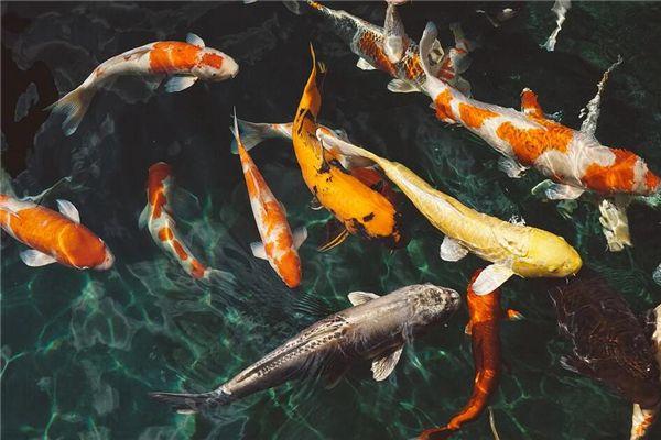 梦见用手抓鱼