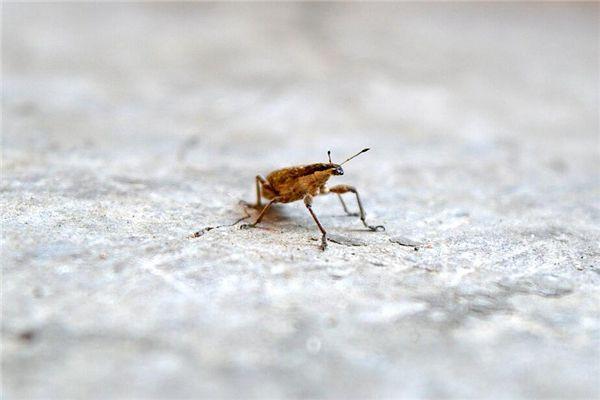 梦见捏死虫子