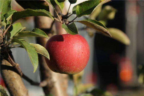 梦见吃烂苹果