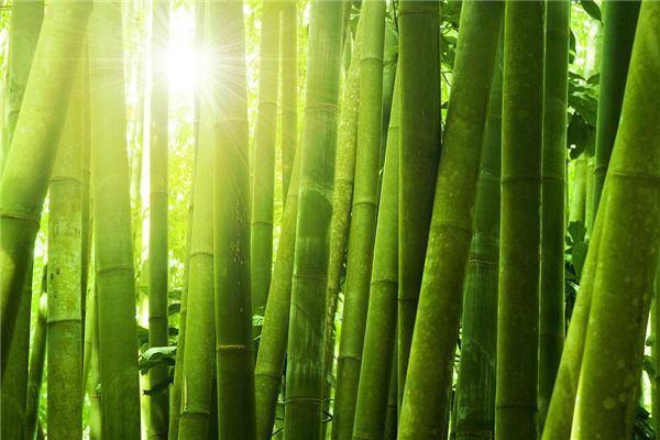 梦见画竹子