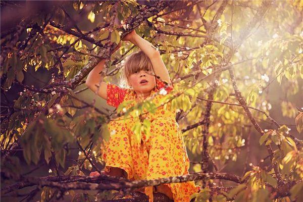 梦见在树上