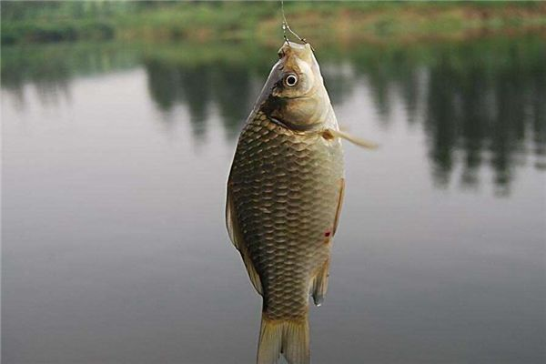 梦见钓很多鱼