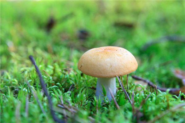 梦见摘蘑菇
