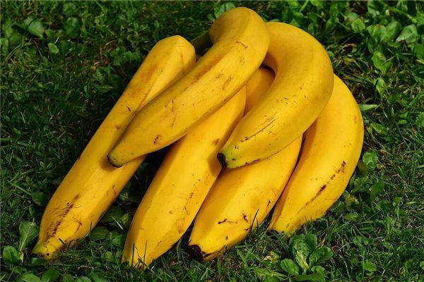 梦见摘香蕉