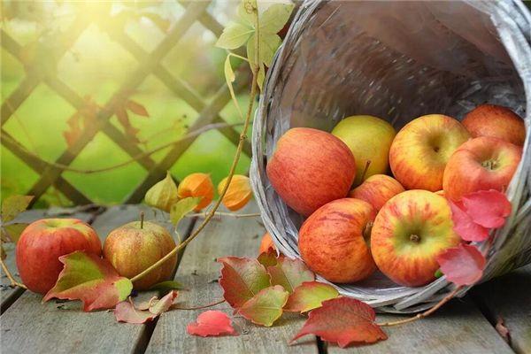梦见偷摘苹果