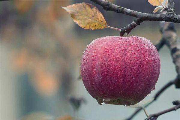 梦见摘红苹果