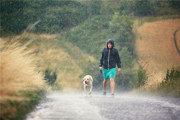 梦见我在雨中跑