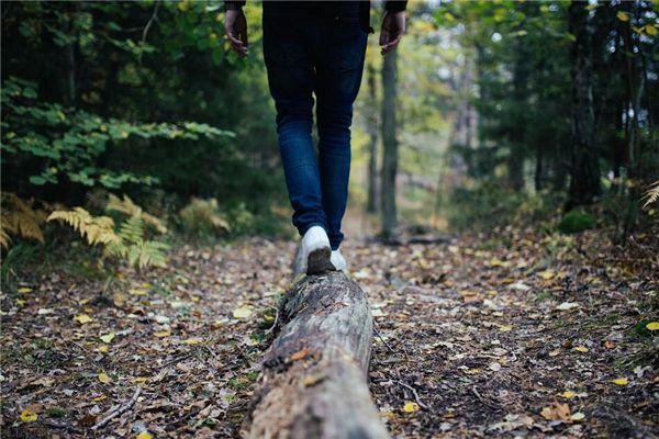 梦见在木头上行走