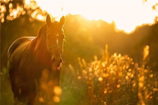 梦见金色的马