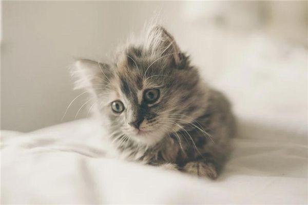 梦见猫上床