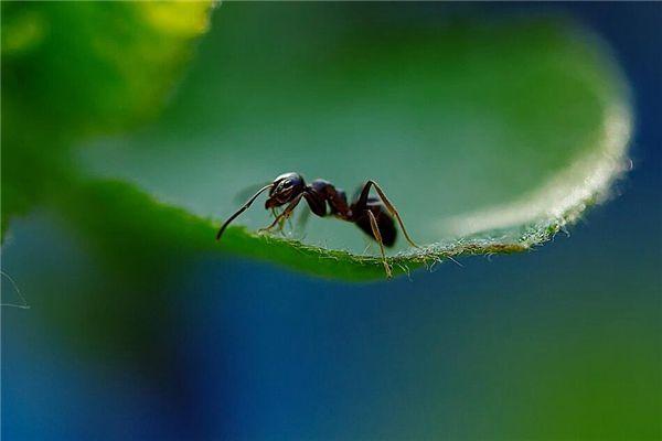 梦见蚂蚁咬人
