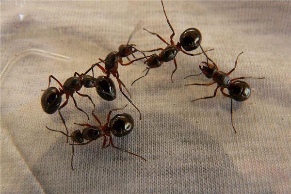 梦见蜘蛛蚂蚁