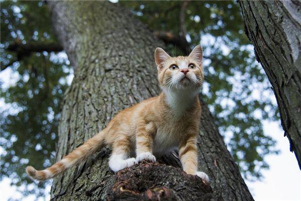 梦见猫上树