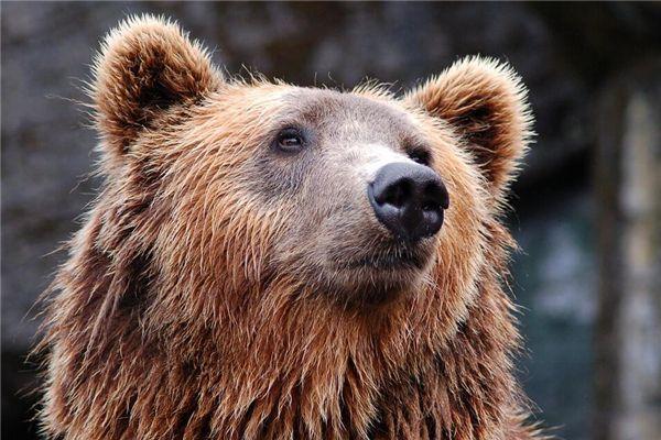 梦见熊咬人