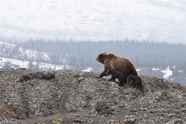 梦见和熊打架