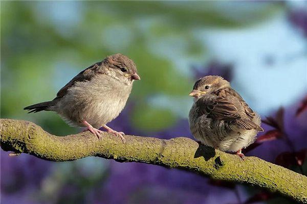 梦见两只鸟