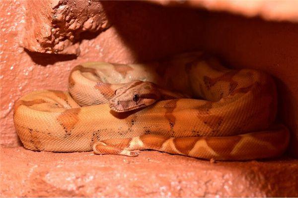梦见抓大蛇