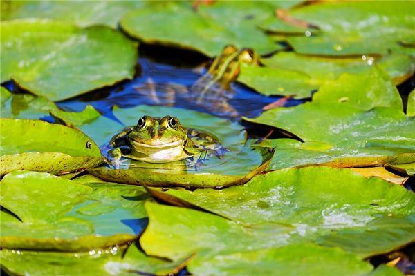 梦见青蛙叫