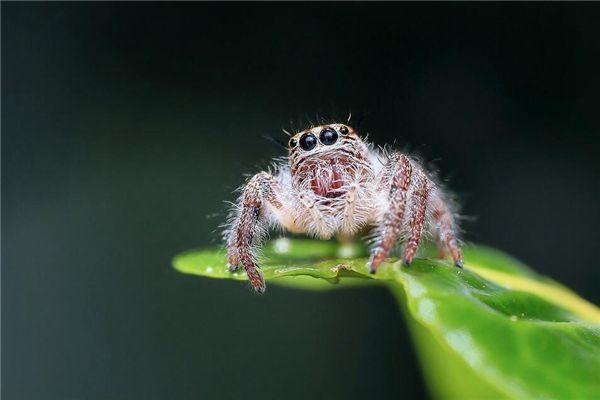 梦见白蜘蛛