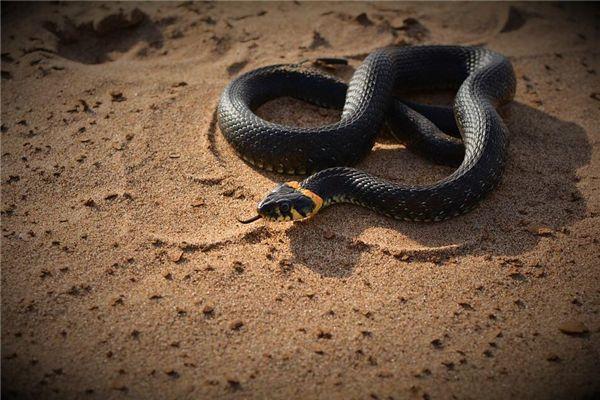 梦见蛇拦路