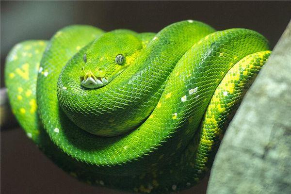 梦见大青蛇