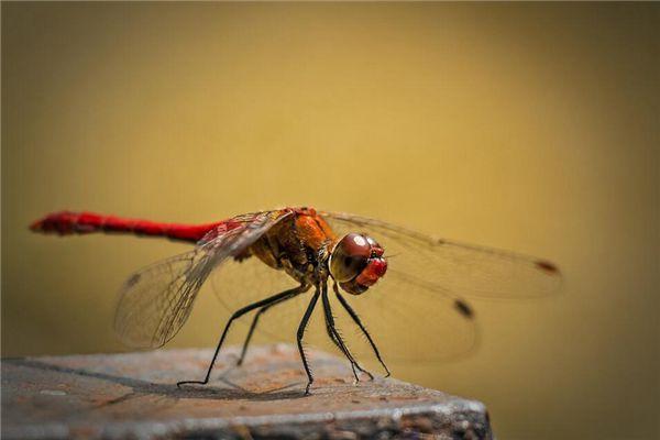 梦见蜻蜓停留在荷叶上