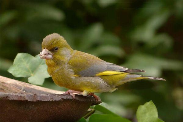 梦见金翅鸟落在自己的头顶