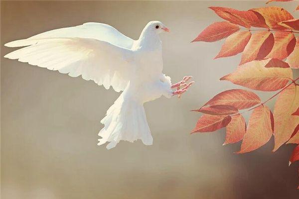 梦见白鸽子