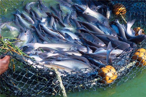 梦见捡死鱼