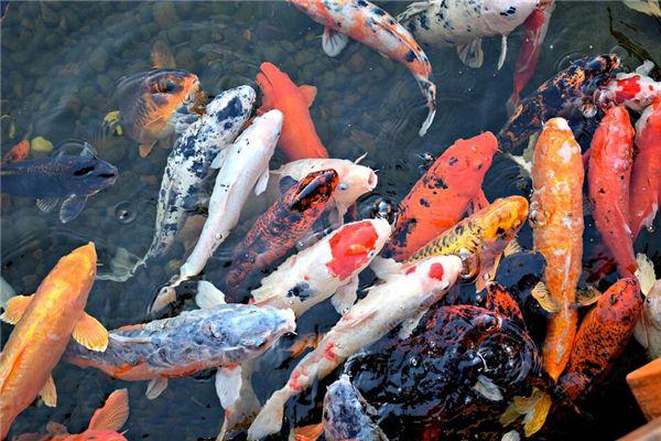 梦见一群鱼