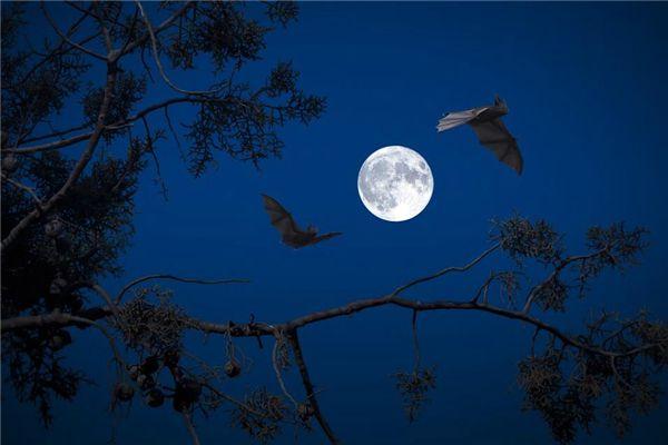 梦见蝙蝠吃虫