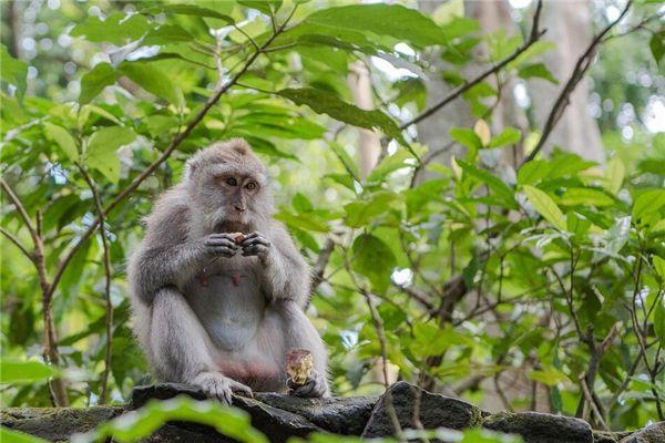 梦见一只猴子
