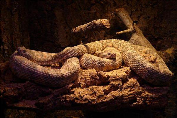 梦见一堆蛇