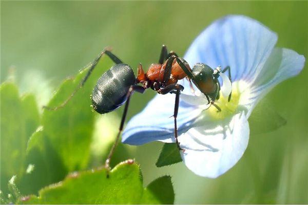梦见蚂蚁和蜘蛛