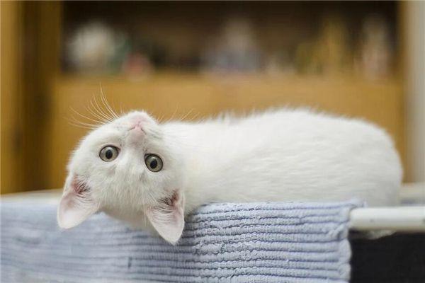 梦见白猫和黑猫